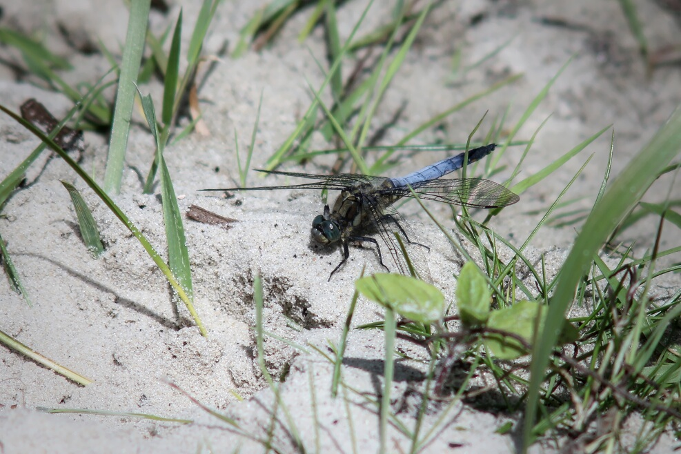 closeup of another dragonfly